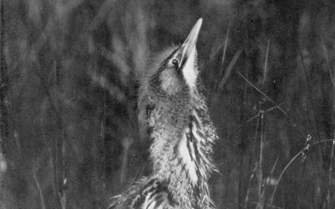 The Lady of the Reeds: The Rediscovery of Norfolk's Pioneering Bird Photographer Emma Turner.