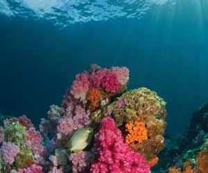 Michelle Devlin – Why we should all love coral reefs