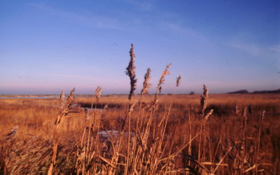 Discover RSPB Titchwell Marsh